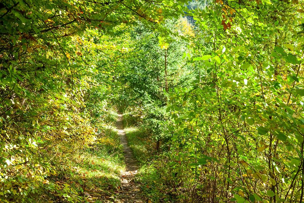 Wanderweg, Waldweg, Wandern, Wandung, Mostviertel, Niederösterreich
