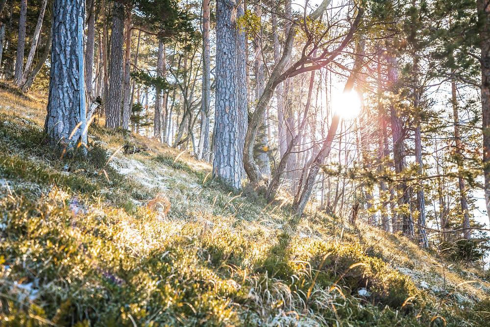 Magische Lichtstimmungen, Nadelwald, Unterberg, Mitterriegel, Niederösterreich, Voralpen, Wandern, Wanderungen, Steig, Wintersonne, Winter, Spätwinter, Wandererlebnis