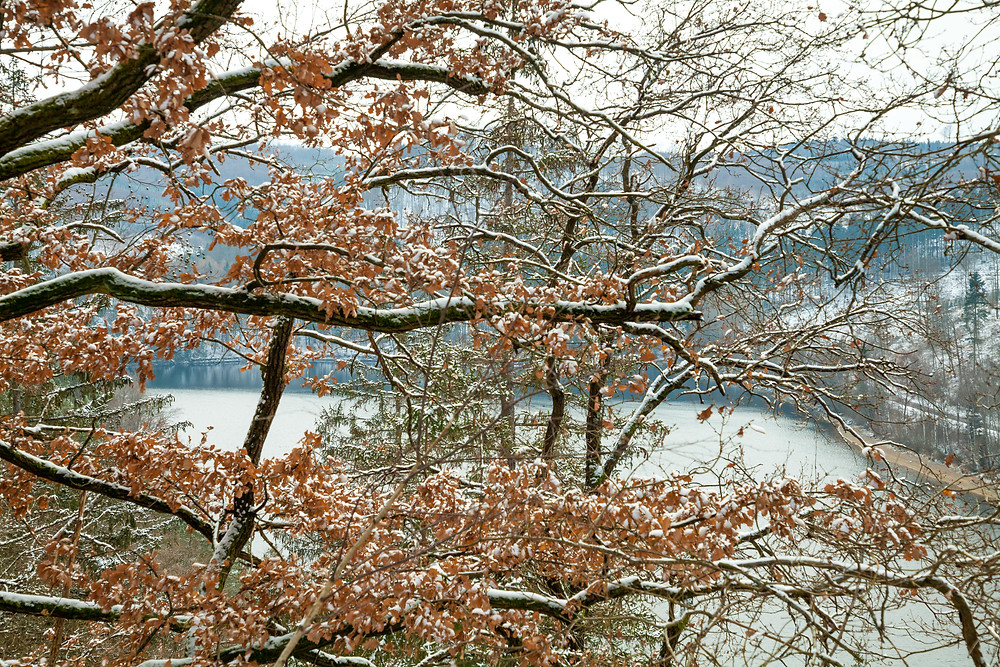 Waldviertel, Niederösterreich, Ruine Dobra, Schloss Waldreichs, Wandern, Wanderung, Winterwandern, Winterwanderung, Kamptal, Dobra Stausee, Kamp, Wanderurlaub, Wanderreise