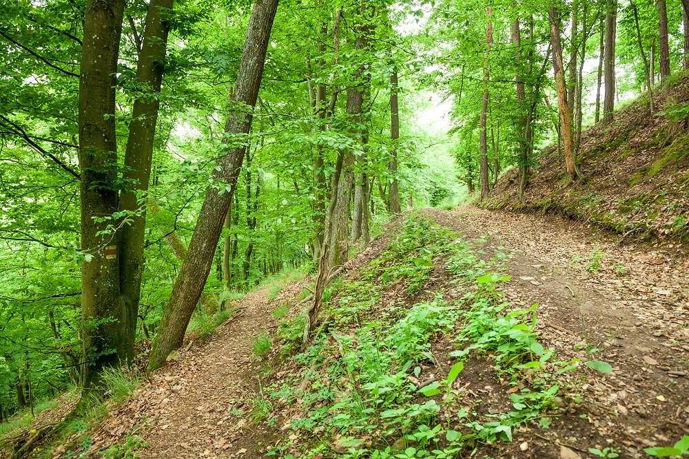 Kamp, Kamptal, Steinegg, Ödes Schloss, Wandern, Wanderung, Ausflug, Waldviertel, Niederösterreich
