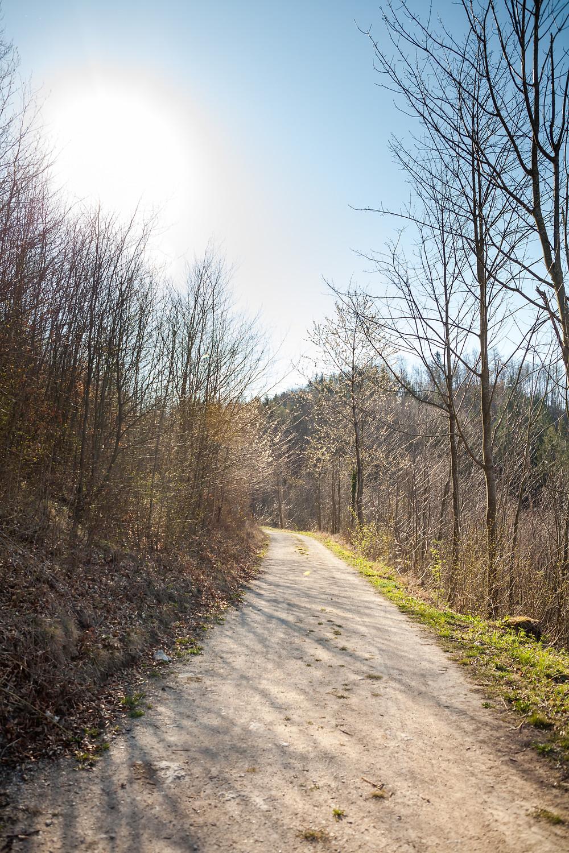 Wanderweg, Wanderung, Wandern, Ruine Rabenstein, Pielachtal, Niederösterreich