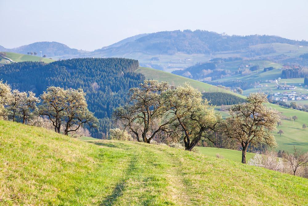 Mostviertel, Wanderweg, Wanderung, Wandern, Mostbirnbaum, Niederösterreich