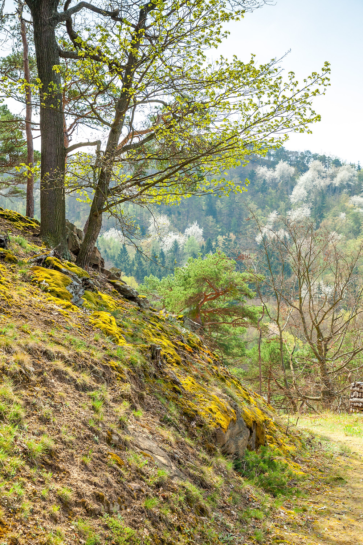 Wachau, Niederösterreich, wandern, Rossatz, Rührsdorf, Wildschweingraben, Panoramaweg, Donau, Donautal, Rundwanderung, Wandertipp, Wanderurlaub, Wanderreise, Urlaub, Frühling