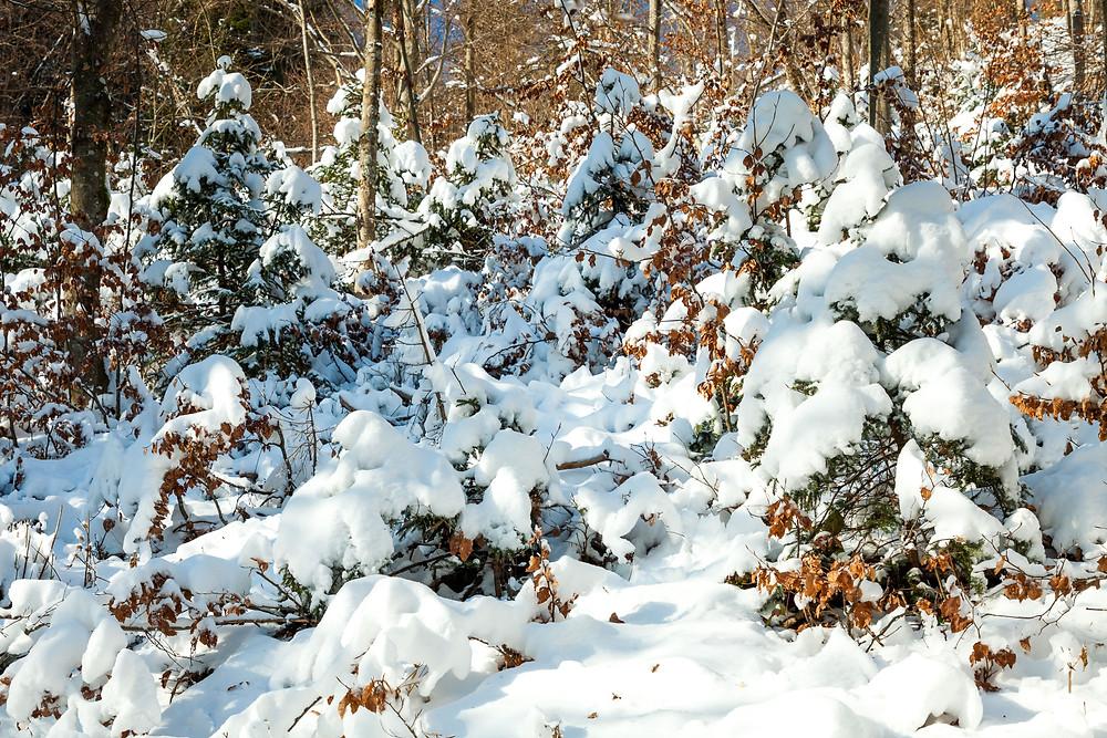 Eisenstein, Alpenvorland, Niederösterreich, Mostviertel, Traisental, Pielachtal, Türnitz, Wandern, Wanderung, Wandertipp, Winterwandern, Gipfeltour, Schnee, Winter, Winterwald