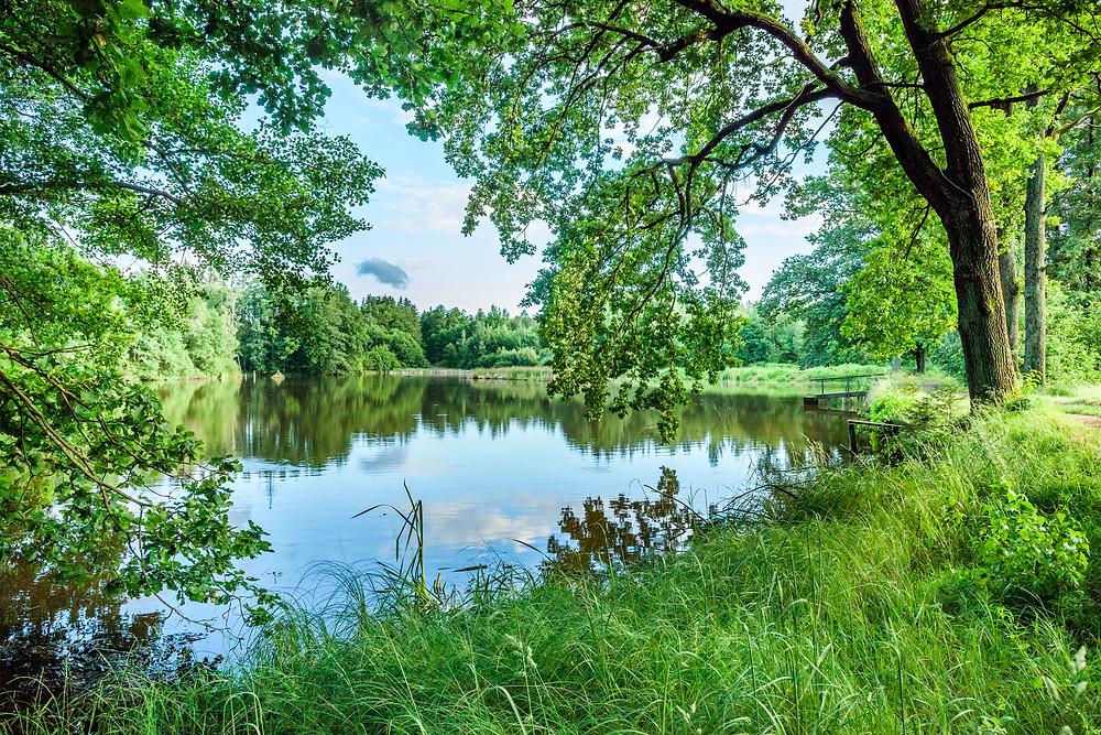 Pilzteich, Teich, Karpfenteich, Fischteich, See, Gmünd, Waldviertel, Niederösterreich, Wandern, Wanderung, Ausflug.