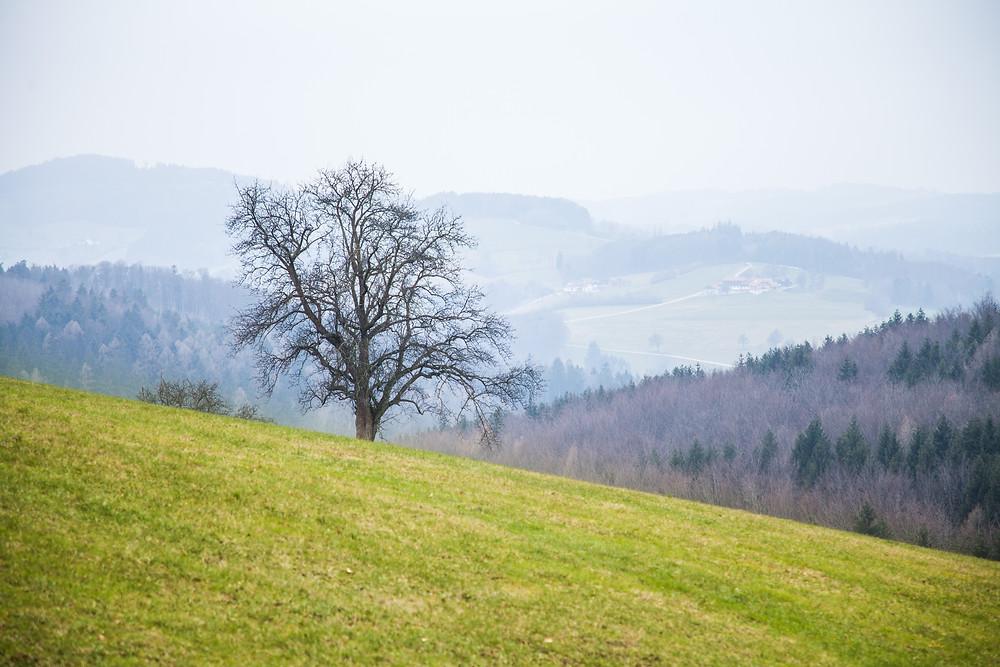 Bank, Bankerl, Kaiserkogel, Hofstetten-Grünau, Mostviertel, Niederösterreich, Wegweiser, Wandern, Wanderung, Hügel, Einsamer Baum, Ausblick