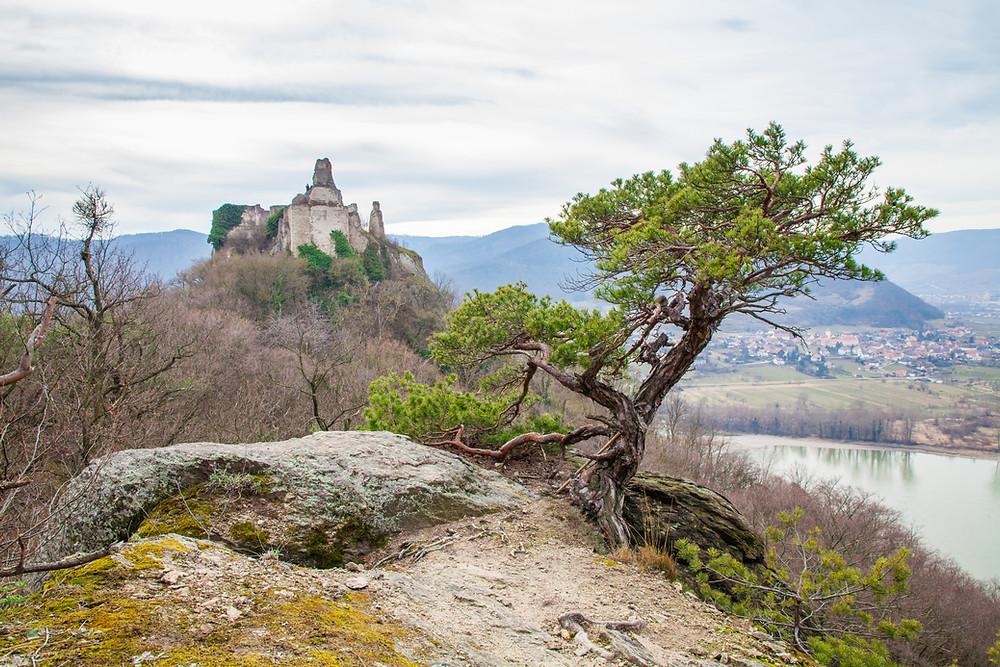 Ruine Dürnstein, Donau, Wachau, Niederösterreich, Wandern, Wanderung, Steig, Ausblick, Wanderlust, Frühling
