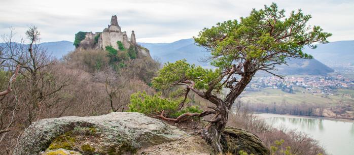 Wandern Wachau: Dürnstein - Vogelbergsteig - Eselsteig in Niederösterreich