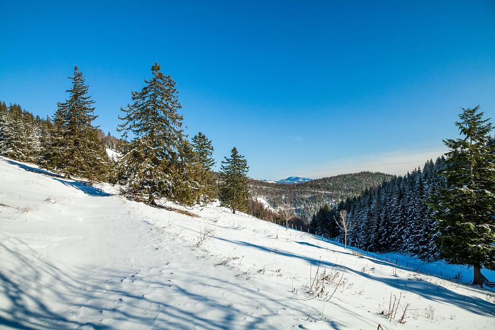 Eisenstein, Alpenvorland, Niederösterreich, Mostviertel, Traisental, Pielachtal, Türnitz, Wandern, Wanderung, Wandertipp, Winterwandern, Gipfeltour, Schnee, Winter, Alm, Weide
