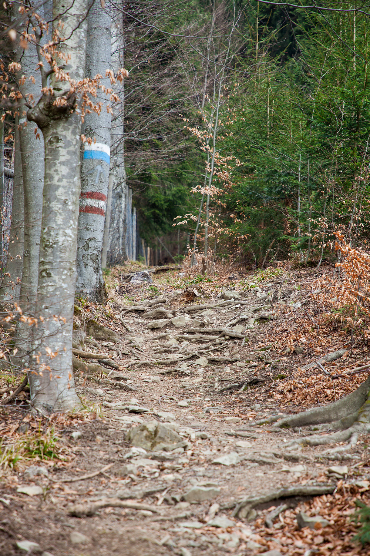 Steig, Hohenstein, Pielachtal, Mostviertel, Niederösterreich, Wandern, Wanderung, Bergwandern