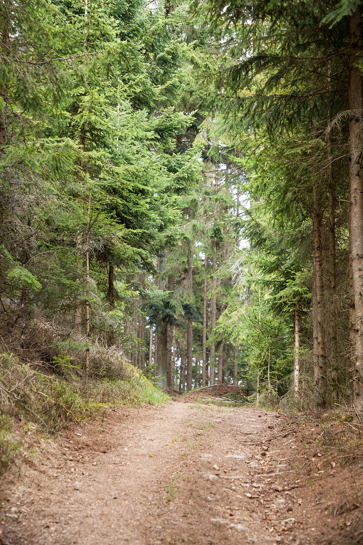 Wanderweg, Wanderung, Wandern, Forstweg, Fichtenwald, Nadelwald