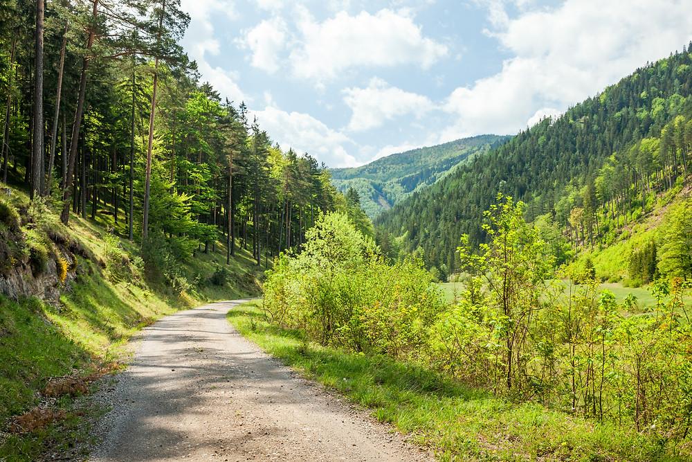 Kieneck, Enzianhütte, Ramsau, Voralpen, Wienerwald, Alpen, Wandern, Wandertipp, Niederösterreich, Ausflug, Alpenverein, Bergwandern, Bergtour