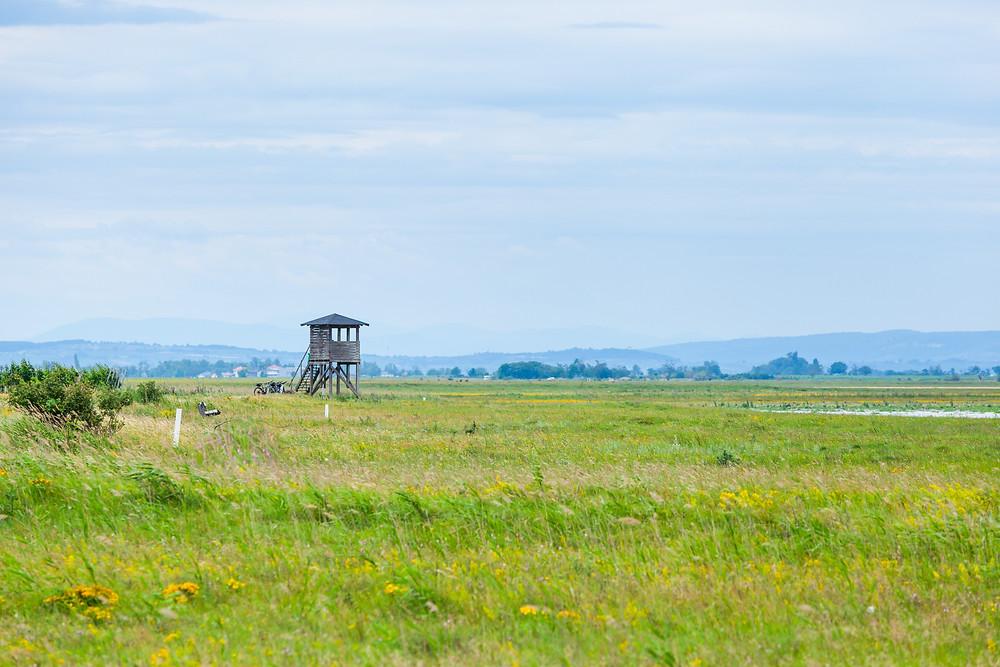 Birdwatching, Vogelbeachtung, Lange Lacke, Neusiedler See, Neusiedlersee, Burgenland, Urlaub, Kurzurlaub, Radfahren, Radtour, Radrunde, Radurlaub,