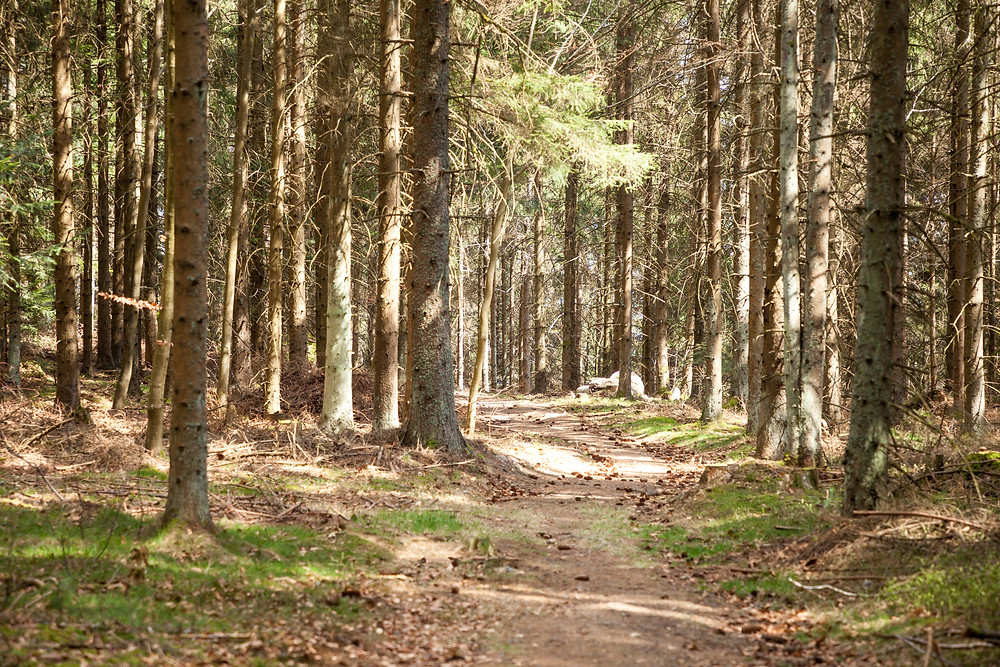 Waldweg, Wandern, Wanderung, Waldviertel