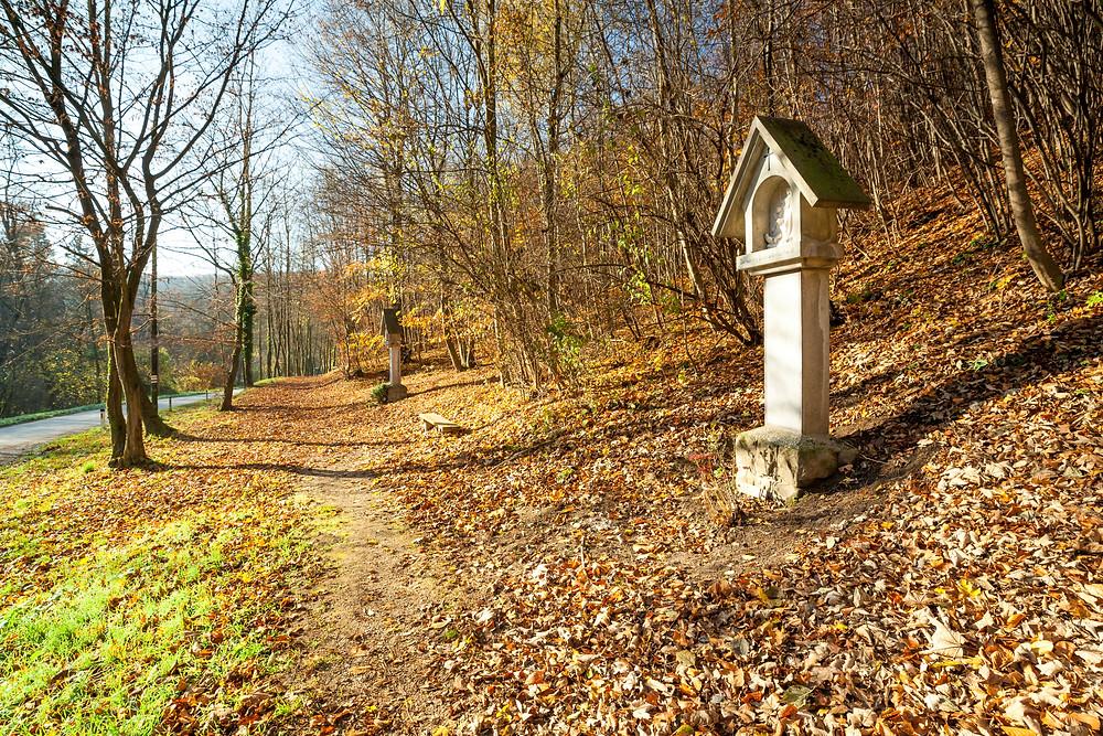 Wienerwald, Niederösterreich, wandern, Wanderung, Warte, Wanderurlaub, Wanderreise, Ausflug, Gugging, Österreich