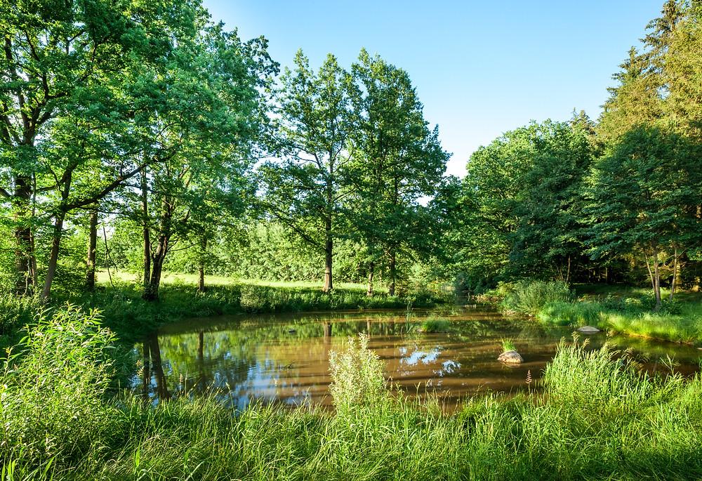 Fuchsteich, Teich, Karpfenteich, Fischteich, See, Gmünd, Waldviertel, Niederösterreich, Wandern, Wanderung, Ausflug.