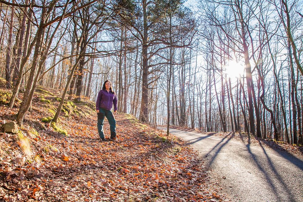 Wanderweg, Wachau, Bärenwand, Wandern, Wanderungen, Winterwandern, Niederösterreich
