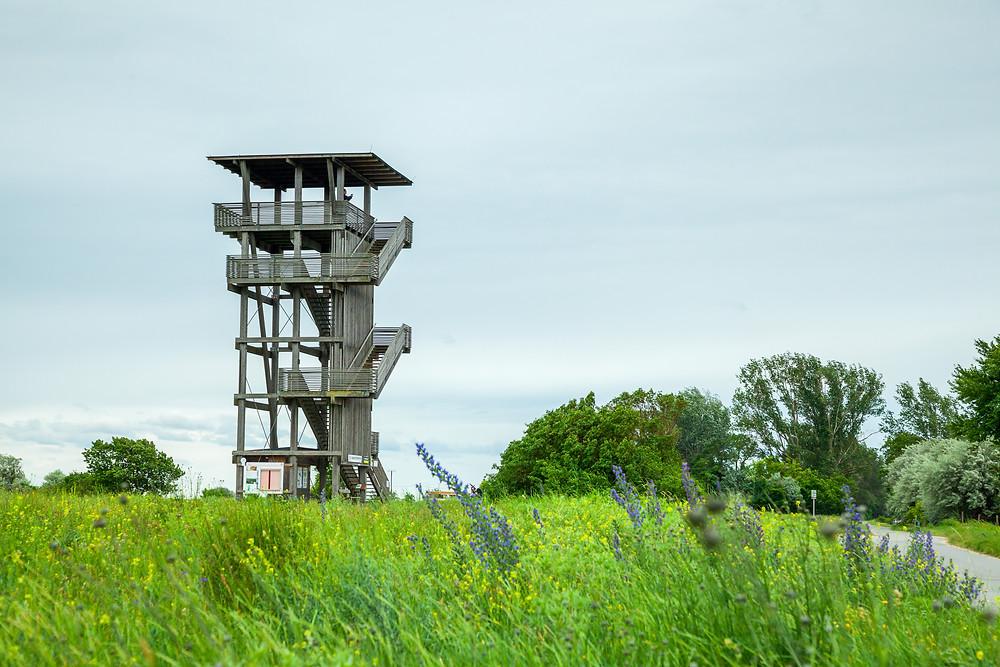 Aussichtsturm, Radrunde, Radtour, Radfahren, Neusiedler See, Neusiedlersee, Burgenland, Urlaub, Reise, Kurzurlaub