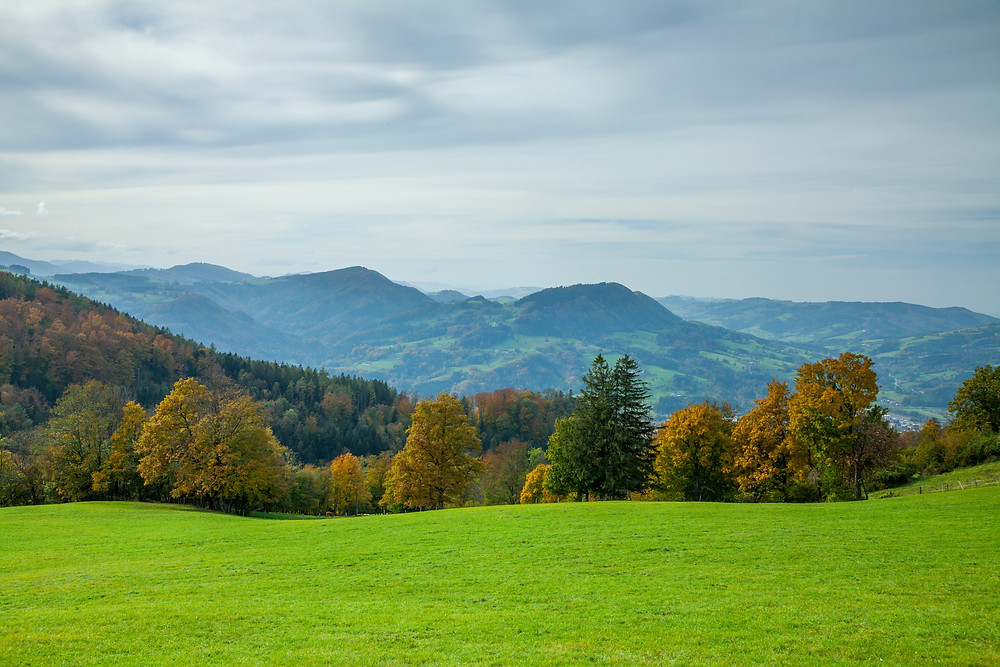 Weide, Aussicht, Fernsicht, Blassenstein, Scheibbs, Niederösterreich, Mostviertel, Wandern, Wanderung,