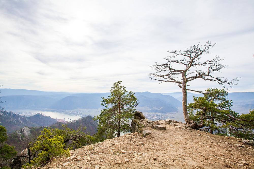 Ausblick, Kanzel, Vogelbergsteig, Wachau, Donau, Dürnstein, Niederösterreich, Wandern, Fotomotiv, Wanderung, Steig, Aussichtspunkt