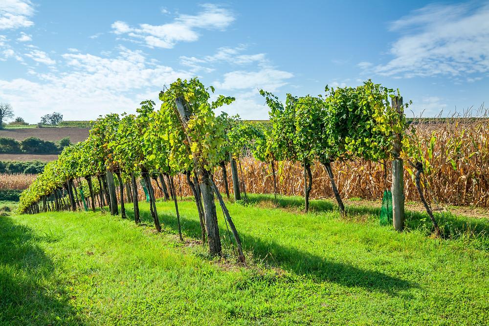 Wandern, Weinviertel, Niederösterreich, Wanderung, Weinberg, Weingarten