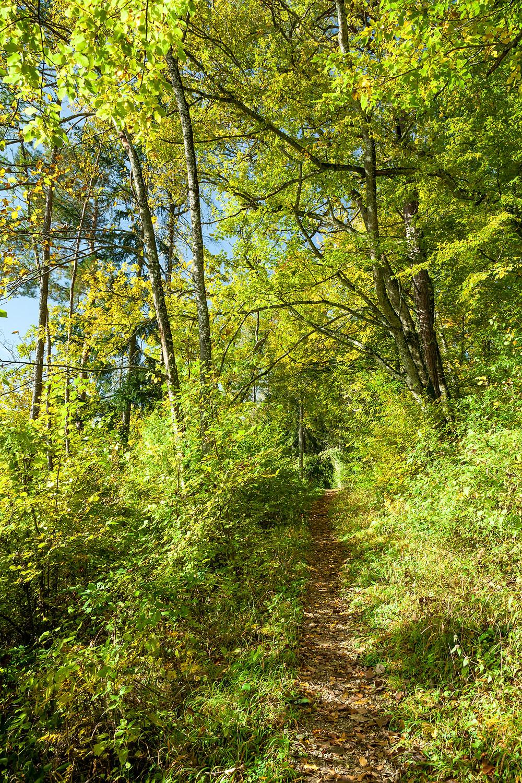 Waldweg, Wanderweg, Wandern, Wanderung, Niederösterreich, Mostviertel,