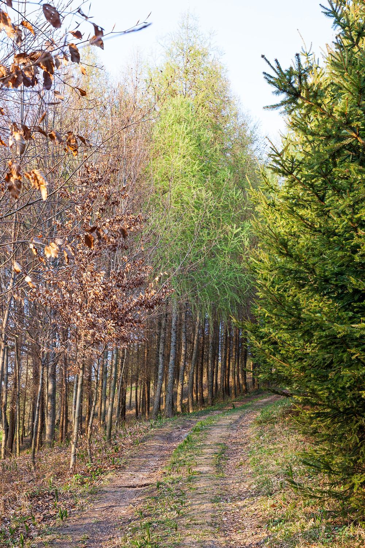 Waldweg, Niederösterreich, Wandern, Wanderung