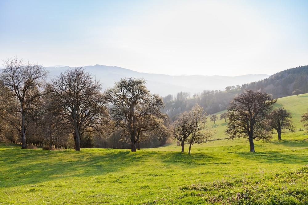 Mostviertel, Niederösterreich, Wandern, Wanderung