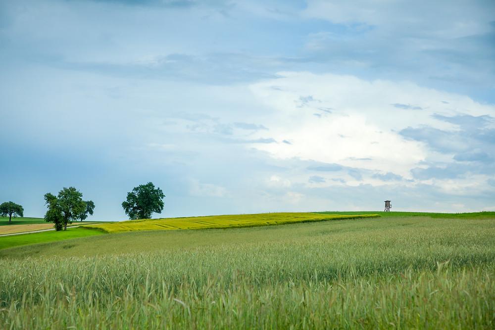 Landschaft, Hochstand, Feld, Weizenfeld, Mostviertel, Felder, Regen, Wolken