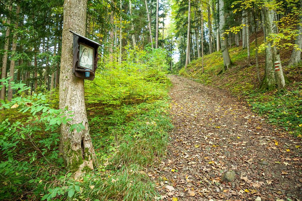 Waldandacht, Waldweg, wandern, Wanderung, Mostviertel, Niederösterreich, Scheibbs