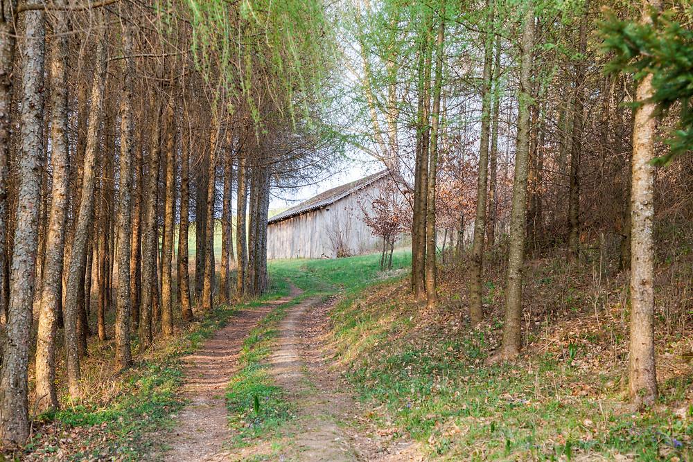 Waldweg, Wandern, Wanderung, Niederösterreich