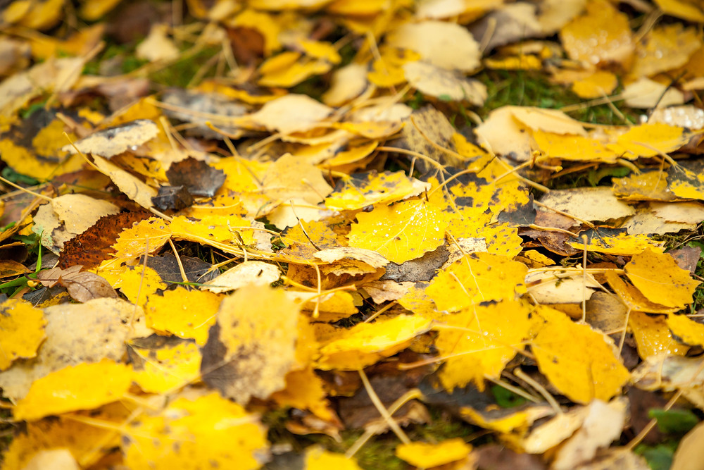Nebelstein, Waldviertel, wandern, Wanderung, Niederösterreich, Wanderurlaub, Wanderreise, Herbst, Wald,