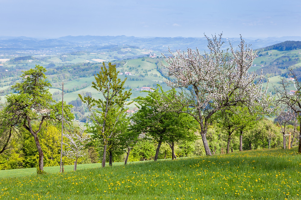 Streuobstwiese, Mostviertel, Obstbäume, Niederösterreich, Wandern, Ausflug