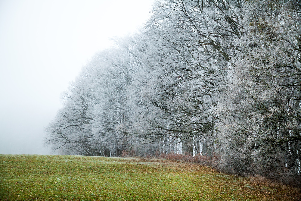 Kaiserkogel, Eschenau, Pielachtal, Traisental, Alpenvorland, Niederösterreich, Wandern, Wanderung, Winterwandern, Winterwanderung, Raureif