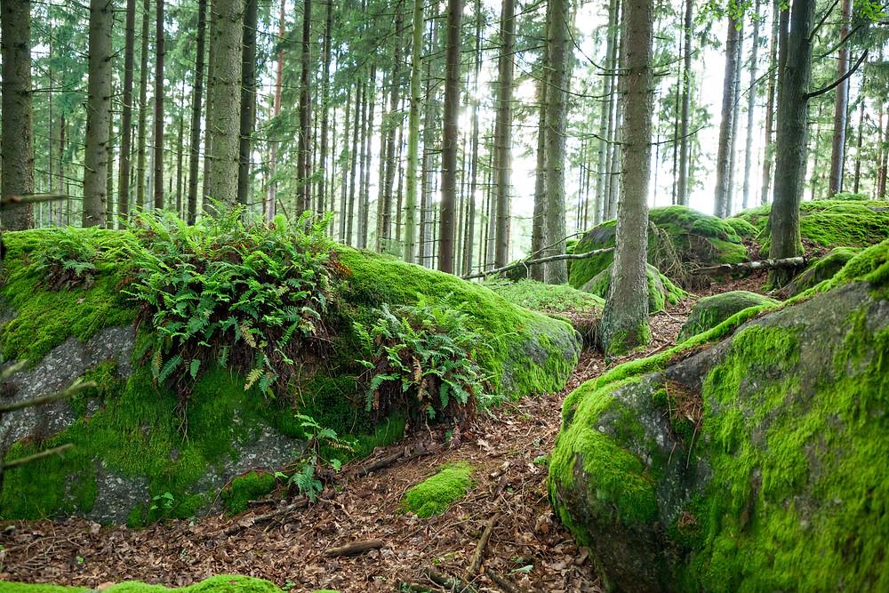 Steinformationen, Wackelsteine, Steine, Felsen, Granit, Waldviertel, Gmünd, Niederösterreich, wandern, Wanderung , Ausflug, Naturerlebnis
