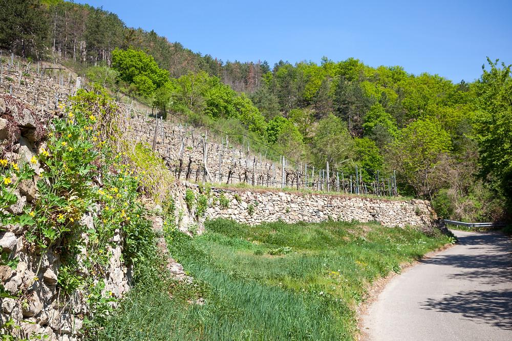 Weinberge, Weinterrassen, Steinmauer, Dürnstein, Wachau, Niederösterreich, Donau, Donautal, Wandern, Ausflug, Wandertipp