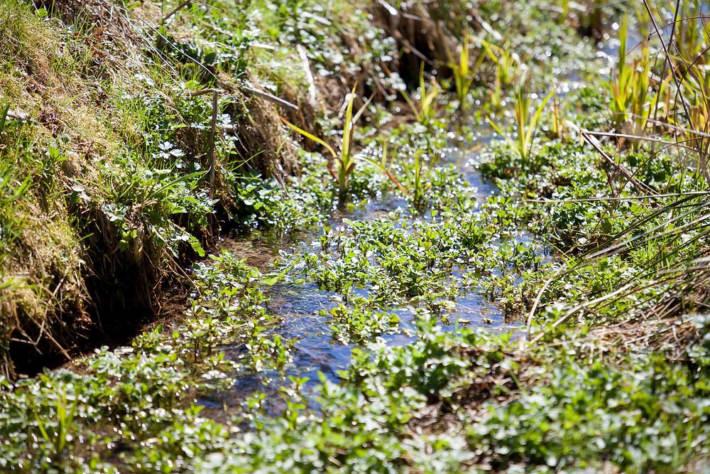 Bach, Bachlauf, Wasserpflanze, Waldviertel, Wandern, Wanderung