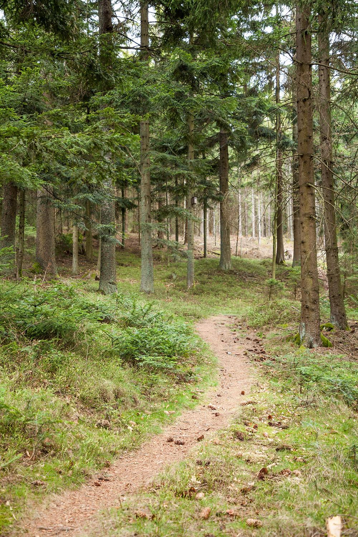 Waldpfad, Waldweg, Fichten, Nadelwald