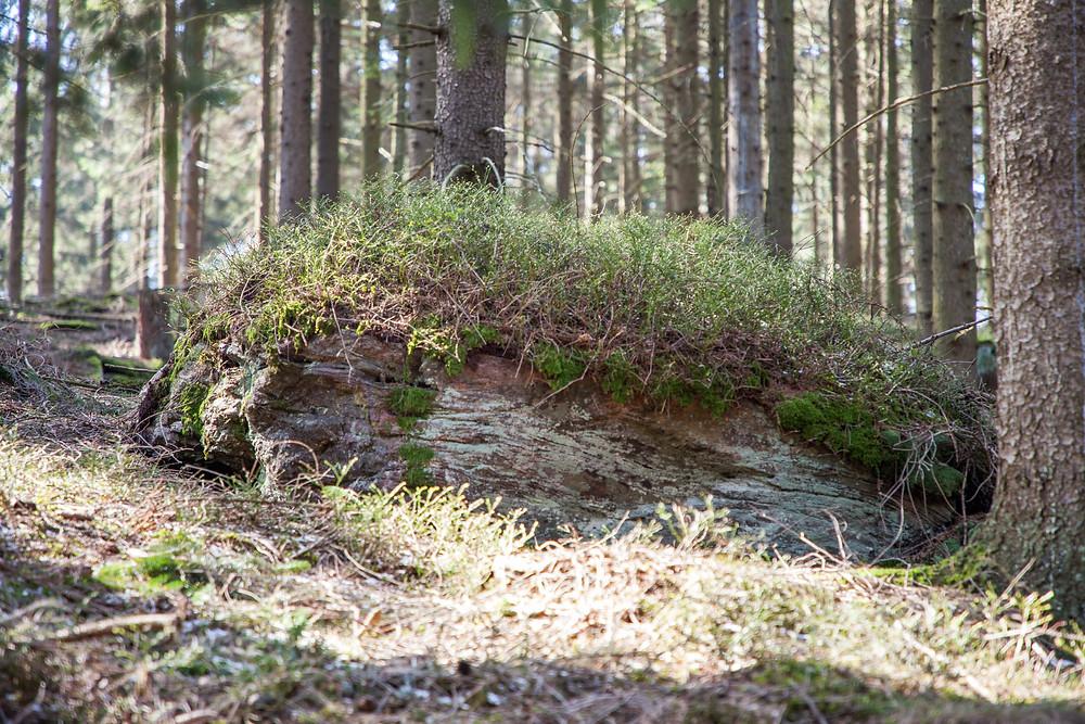 Granit, Waldviertel, Steine, Felsen, Moos, Wald, Niederösterreich
