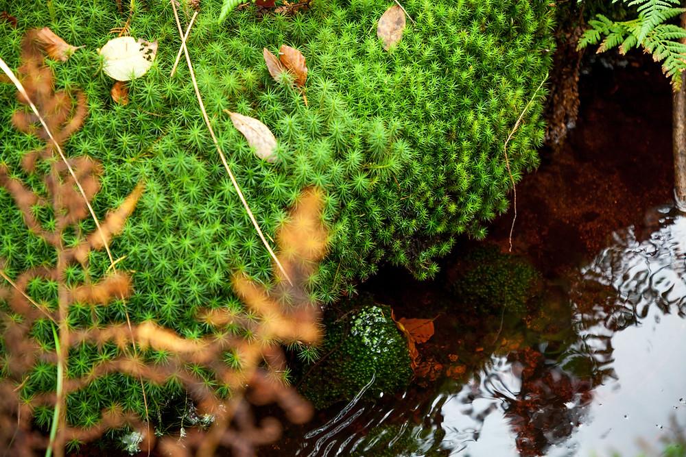 Nebelstein, Waldviertel, wandern, Wanderung, Niederösterreich, Wanderurlaub, Wanderreise, Herbst, Wald, Moos