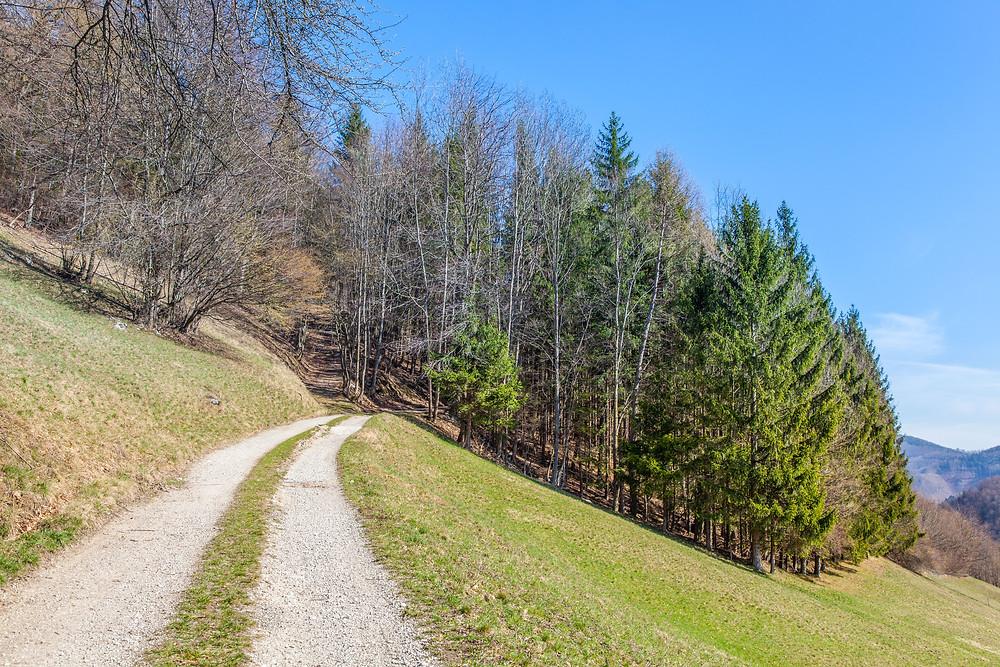Wanderweg, Wandern, Mostviertel, Niederösterreich, Lilienfeld, Schneerosenwarte, Lorenzipechkogel, Frühling, Wiese, Wanderung,