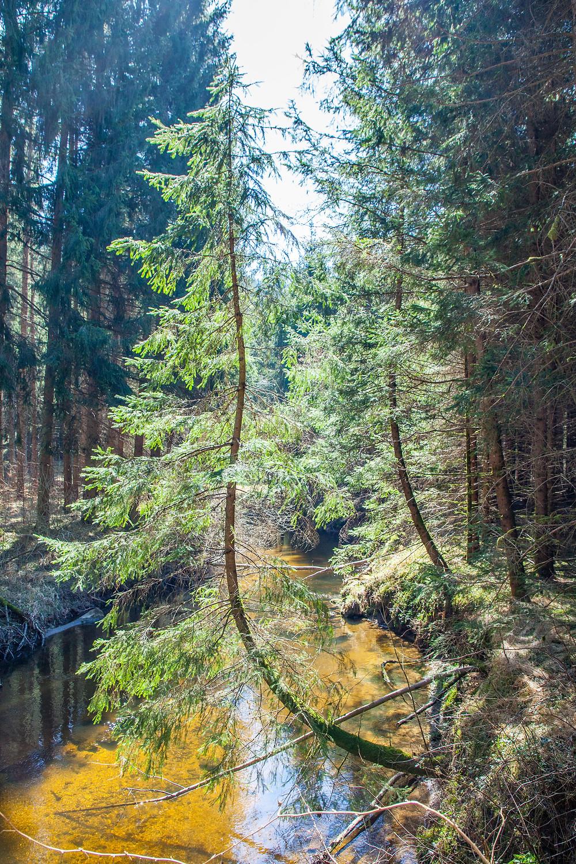Kamp, Kamptal, Rappottenstein, Waldviertel, Niederösterreich, Wandern, Wanderung, Fluss, Bach, Nadelwald