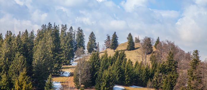 Wandern Alpen: Ebenwaldhöhe - Almwanderung in Niederösterreich