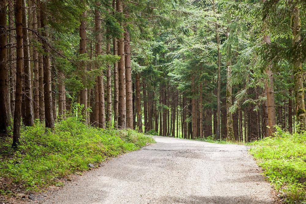 Wald, Nadelwald, Fichten, Mostviertel, Niederösterreich