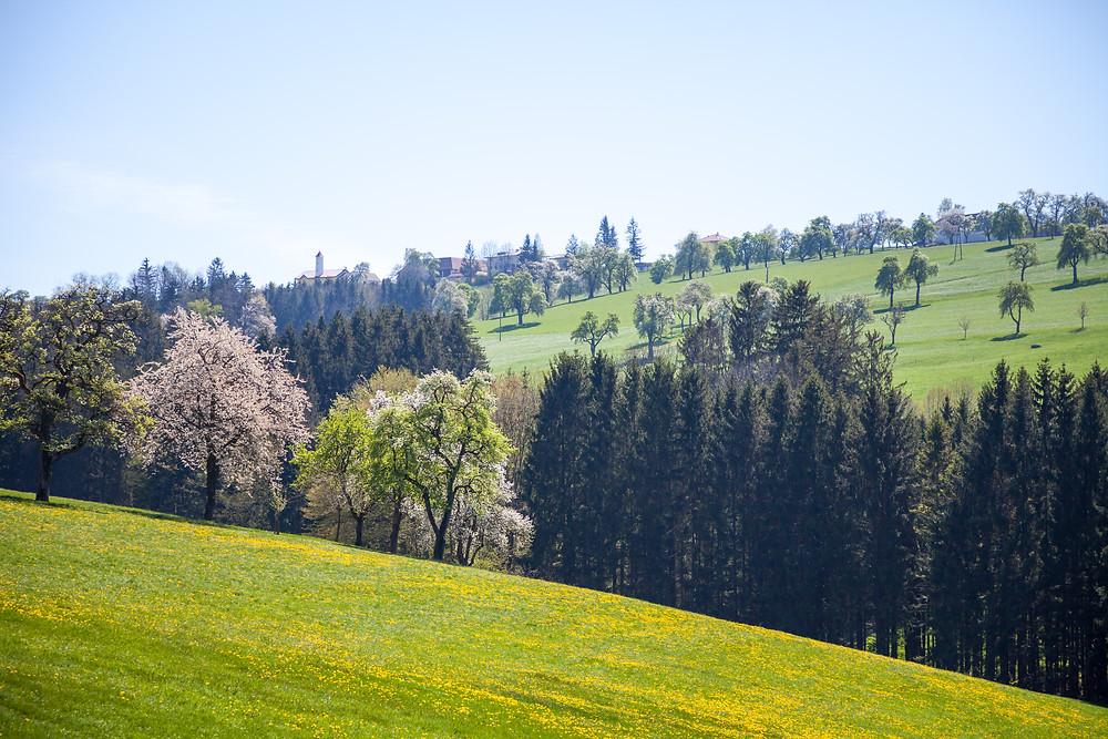 Mostviertel, Mostbirnbaumblüte, Wandern, Wandertipp, Ausflug, Mostobstwanderweg