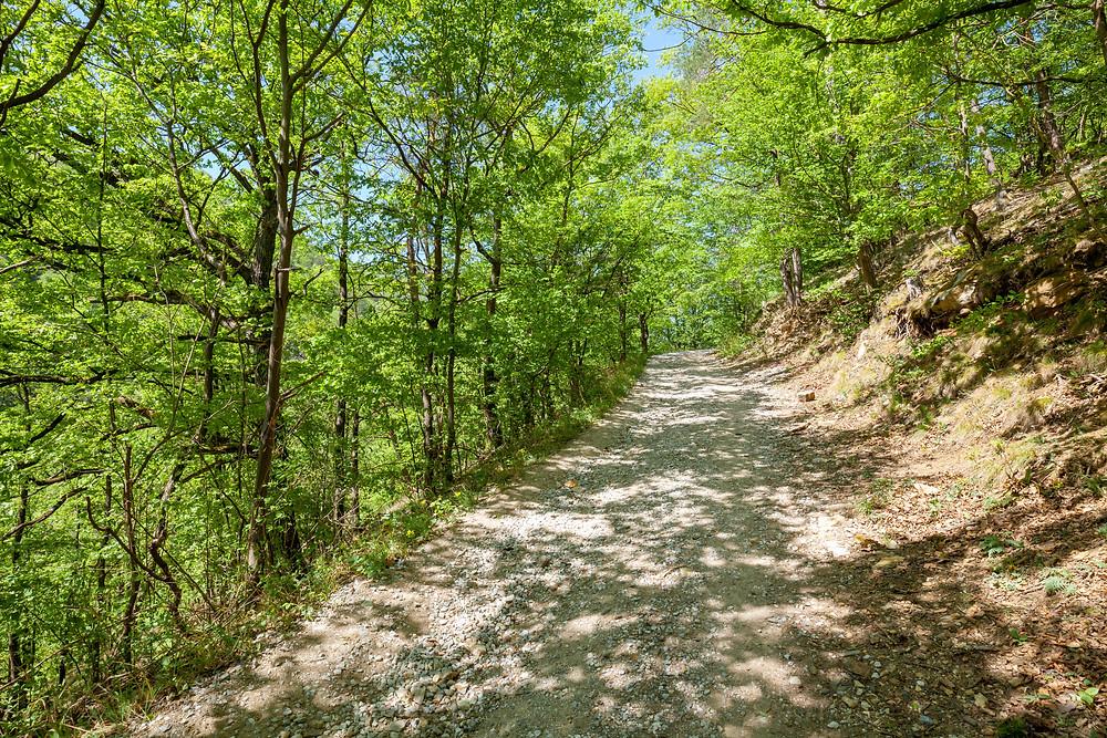 Wanderweg, Forstweg, Wandern, Ausflug, Wachau, Niederösterreich, Spitz,