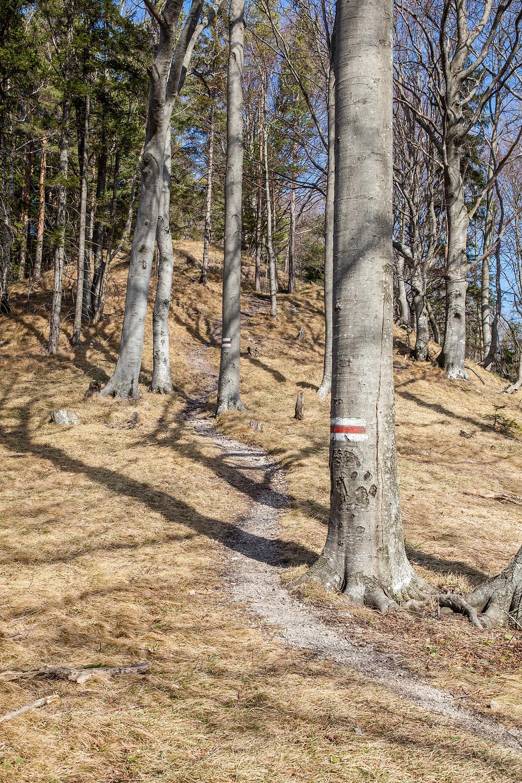 Schneerosenwarte, Lilienfeld, Wandern, Wanderung, Wanderweg, Steig, Niederösterreich, Mostviertel, Wald