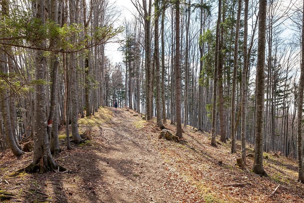 Waldweg, Steig, Pfad, Wandern, Wanderung, Hirschkogel, Forsteralm, Mostviertel, Niederösterreich
