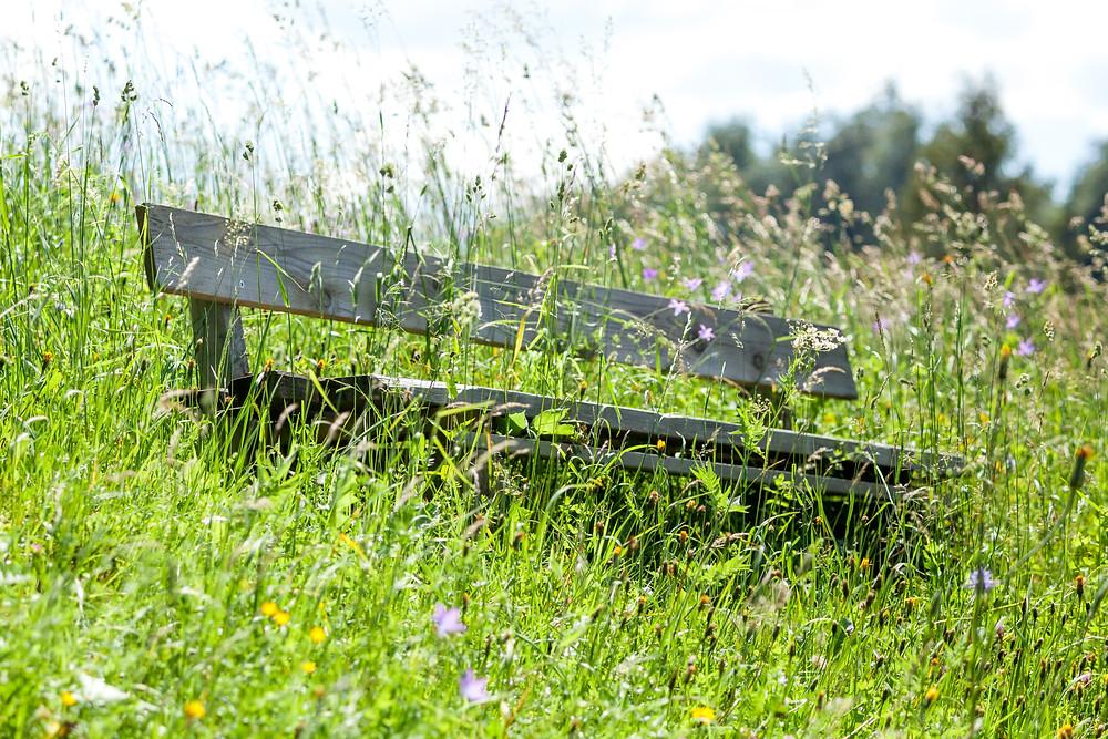 Blumenwiese, Almwiese, Blumen, Wiesenblumen, Gras. Annaberg, Annahm, Hennesteck, wandern, Wanderung, Ausflug, Niederösterreich, Mostviertel, Blumenwiese, Bank