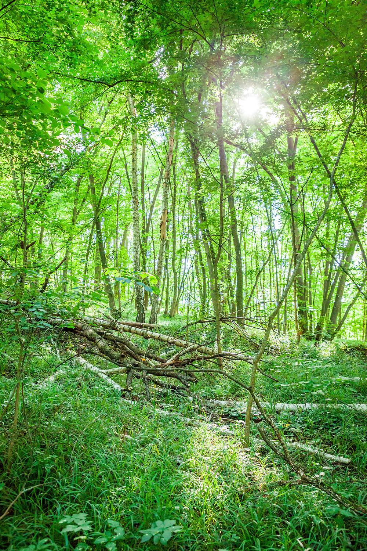Wildkatzenweg, Einsiedlerweg, Nationalpark Thayatal, Thaya, Thayatal, Waldviertel, Niederösterreich, Naturpark, wandern, Wanderung, Ausflug, Hardegg, Natur
